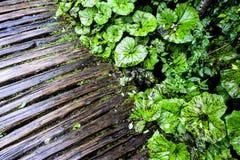 Χώρα των θαυμάτων φύσης λιμνών Plitvice Στοκ Εικόνα