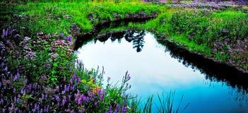 χώρα wildflower Στοκ εικόνες με δικαίωμα ελεύθερης χρήσης