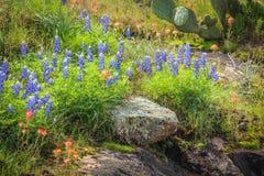 Χώρα Wildflowers Hill του Τέξας Στοκ Φωτογραφία