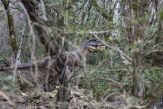 Χλεύη δεινοσαύρων μεταξύ των αλσών των δέντρων στην επιφύλαξη φύσης Sataplia Στοκ Εικόνες