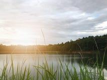 Χλεύη επάνω στο φως στο φράγμα με τη χλόη στο υπόβαθρο φύσης πηγών Στοκ εικόνα με δικαίωμα ελεύθερης χρήσης