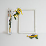 Χλεύη πλαισίων επάνω με Mimosa Στοκ Φωτογραφίες