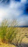 Χλοώδεις αμμόλοφοι άμμου της θάλασσας της Βαλτικής στο πρώτο πλάνο Στοκ Φωτογραφίες