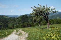 Χλοώδη λιβάδια στους λόφους Skofja Loka Στοκ Φωτογραφίες