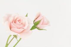 Χλωμά ρόδινα τριαντάφυλλα κρητιδογραφιών Στοκ φωτογραφία με δικαίωμα ελεύθερης χρήσης