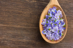 Χλωμιάστε - μπλε πέταλα λουλουδιών Στοκ Φωτογραφίες
