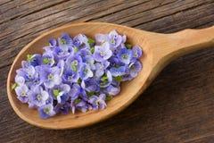 Χλωμιάστε - μπλε πέταλα λουλουδιών Στοκ φωτογραφία με δικαίωμα ελεύθερης χρήσης