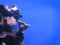 Χλωμιάστε - ρόδινα κοράλλια στοκ φωτογραφίες με δικαίωμα ελεύθερης χρήσης