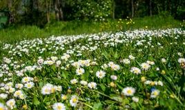 Χλωρίδα άνοιξη Στοκ Φωτογραφία