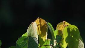 Χλωρίδα 1 ζουγκλών φιλμ μικρού μήκους
