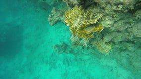 Χλωρίδα και πανίδα των κοραλλιογενών υφάλων απόθεμα βίντεο
