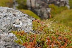 Χλωρίδα Νορβηγία στοκ εικόνες