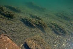 Χλωρίδα στο κατώτατο σημείο της κοίτης του ποταμού 03 Στοκ Εικόνες
