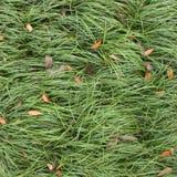 Χλόες με τα πεσμένα φύλλα στοκ εικόνες