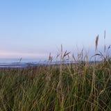 Χλόες στον αμμόλοφο στοκ φωτογραφία με δικαίωμα ελεύθερης χρήσης
