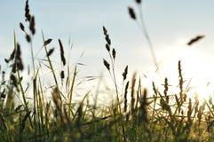 Χλόης στο θερινό ήλιο Στοκ εικόνα με δικαίωμα ελεύθερης χρήσης