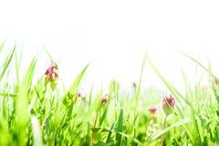 Χλόη άνοιξη και υπόβαθρο λουλουδιών στοκ φωτογραφία