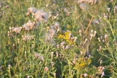 χλόη ένα θαμπάδων ανασκόπησης καλοκαίρι φυτών Στοκ Φωτογραφία