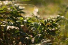 χλόη ένα θαμπάδων ανασκόπησης καλοκαίρι φυτών Στοκ εικόνες με δικαίωμα ελεύθερης χρήσης
