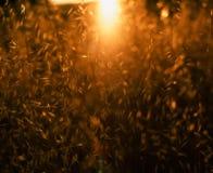 χλόη ένα θαμπάδων ανασκόπησης καλοκαίρι φυτών Στοκ Φωτογραφίες