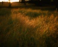 χλόη ένα θαμπάδων ανασκόπησης καλοκαίρι φυτών Στοκ φωτογραφίες με δικαίωμα ελεύθερης χρήσης