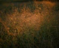 χλόη ένα θαμπάδων ανασκόπησης καλοκαίρι φυτών Στοκ φωτογραφία με δικαίωμα ελεύθερης χρήσης
