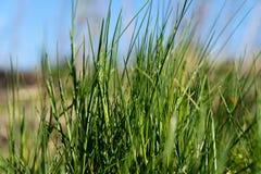 χλόη ένα θαμπάδων ανασκόπησης καλοκαίρι φυτών Στοκ Εικόνες