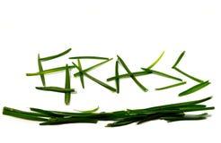 Χλόη λέξης που γράφεται με την πράσινη χλόη Στοκ φωτογραφία με δικαίωμα ελεύθερης χρήσης