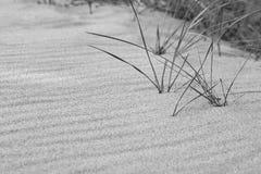 Χλόη αμμόλοφων ακόμα στην παραλία σε γραπτό με τους κυματισμούς τ άμμου Στοκ εικόνα με δικαίωμα ελεύθερης χρήσης
