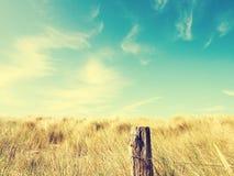 Χλόη αμμόλοφων με έναν μπλε θερινό ουρανό Στοκ Φωτογραφία