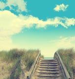 Χλόη αμμόλοφων σε έναν μπλε θερινό ουρανό με τις μορφές σύννεφων Στοκ εικόνα με δικαίωμα ελεύθερης χρήσης