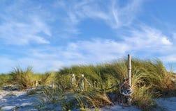 Χλόη αμμόλοφων Στοκ Φωτογραφία