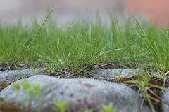 Χλόη αν και πέτρες Στοκ εικόνα με δικαίωμα ελεύθερης χρήσης