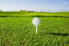 χλόη γκολφ λεσχών σφαιρών Στοκ Εικόνες