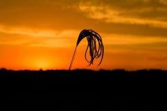 Χλόη 1 ηλιοβασιλέματος Στοκ εικόνα με δικαίωμα ελεύθερης χρήσης
