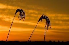 Χλόη 2 ηλιοβασιλέματος Στοκ Εικόνες