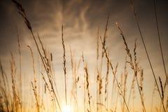 Χλόη ηλιοβασιλέματος Στοκ Εικόνες