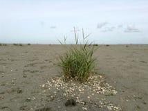 Χλόη θάλασσας στη χαμηλή παλίρροια Στοκ Εικόνες