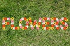 Χλόη λιβαδιών άνοιξη φύσης άνοιξη κήπων λουλουδιών λουλουδιών Στοκ Εικόνες