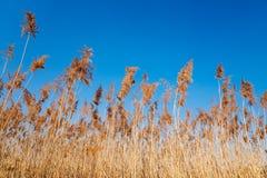 Χλόη λιβαδιών με το μπλε ουρανό στοκ φωτογραφία