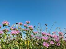 Χλόη λιβαδιών, λουλούδια, υπόβαθρο ουρανού Στοκ Φωτογραφίες