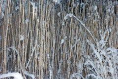 Χλόη κάτω από το χιόνι Στοκ Φωτογραφία