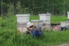 Χλόη καθαρίσματος μελισσοκόμων από την κυψέλη Στοκ Εικόνα