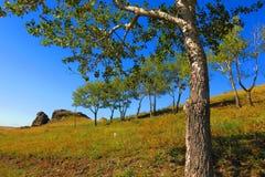 Χλόη και δέντρα και μπλε ουρανός Στοκ Εικόνες
