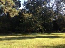 Χλόη και δέντρο Στοκ Φωτογραφίες