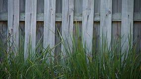 Χλόη και μια ξύλινη ταπετσαρία φρακτών Στοκ Εικόνες