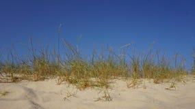 Χλόη και μπλε ουρανός αμμόλοφων Στοκ Εικόνα