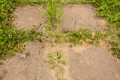 Χλόη και μυρμηγκοφωλιά στη διαδρομή πιάτων τσιμέντου στον κήπο Στοκ Εικόνες