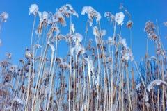 Χλόη και ουρανός Στοκ εικόνες με δικαίωμα ελεύθερης χρήσης