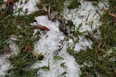 Χλόη και πάγος στοκ φωτογραφίες